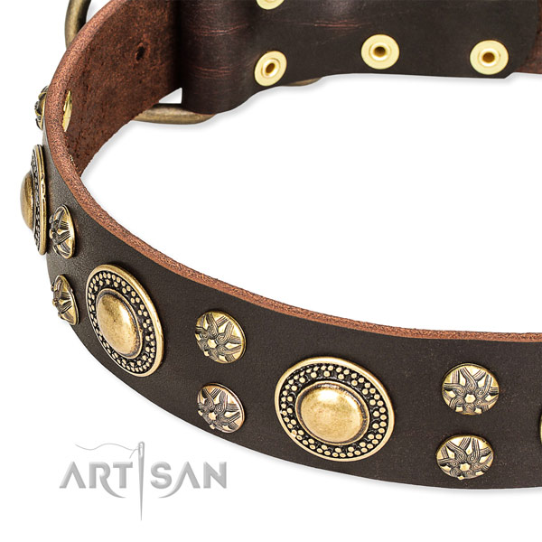 Leather dog collar with incredible studs