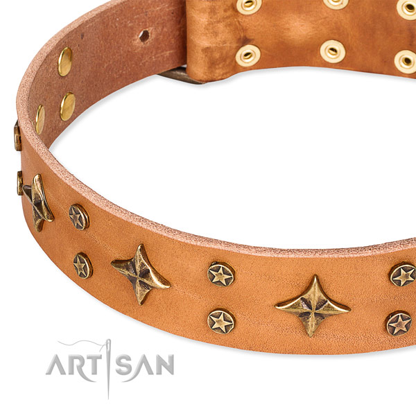 Full grain genuine leather dog collar with remarkable embellishments