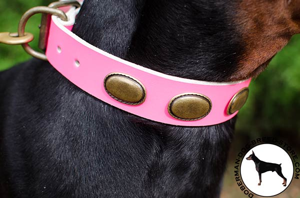 Brass hardware on leather Doberman collar