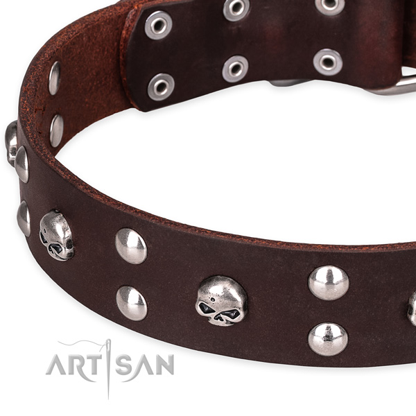 Day-to-day leather dog collar with fancy decorations