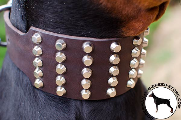 Nickel plated decorations on leather Doberman collar