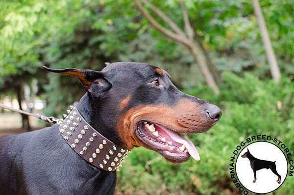 Super wide Doberman collar