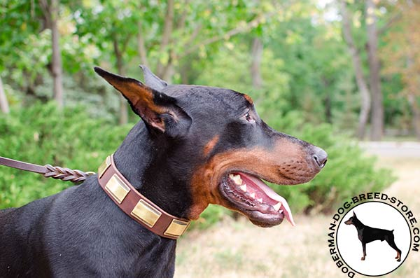 Multi-task leather collar for Doberman