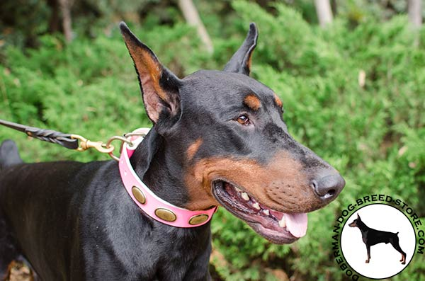 Female pink leather collar for Doberman breed