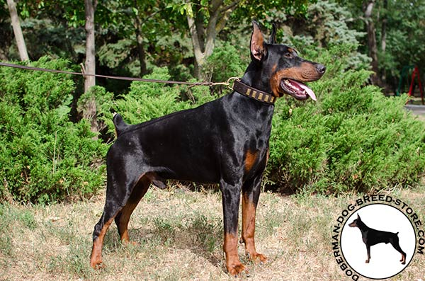 Durable natural leather collar for Doberman