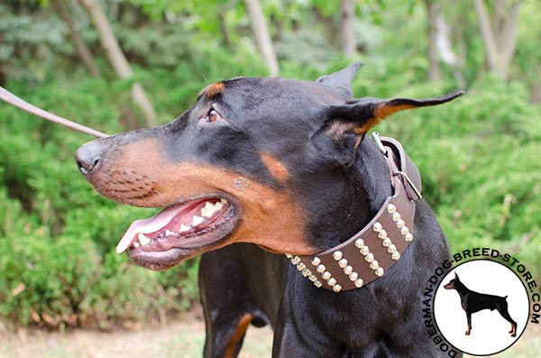 Fabulous leather Doberman collar