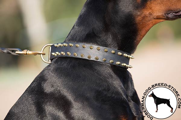 Polished brass spikes on Doberman collar