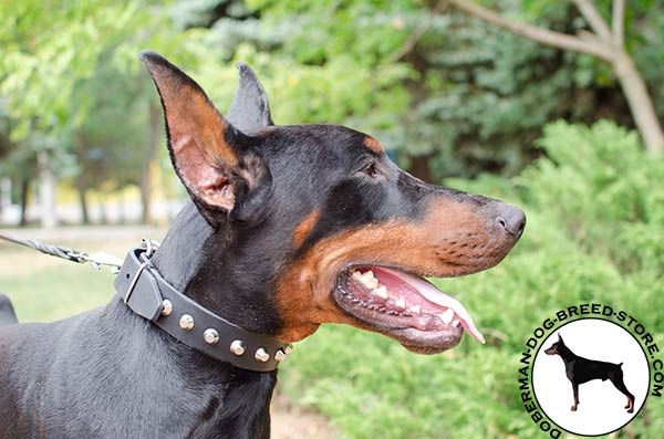 Dependable genuine leather collar for Doberman