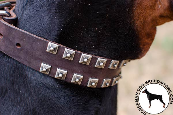 Riveted studs on Doberman collar