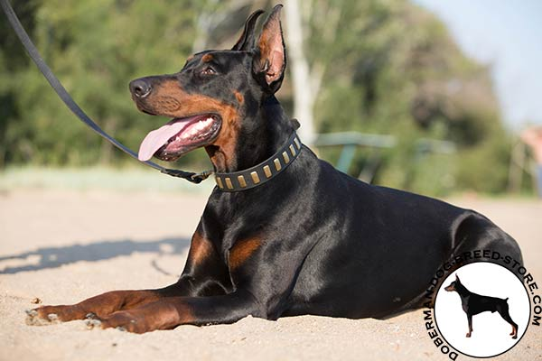 Designer natural leather collar for Doberman