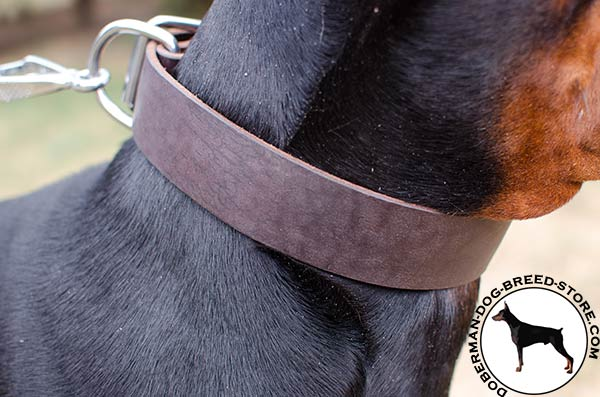 Durable leather collar for powerful Doberman