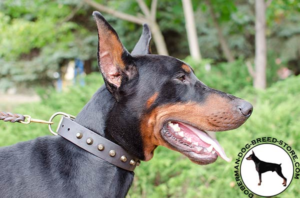 Pleasant walking with elegant leather Doberman collar