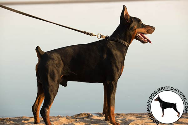 Two ply leather Doberman choke collar