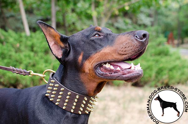 Dependable and strong leather collar for Doberman