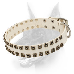 White leather Doberman collar with studs