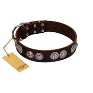 """High and Mighty"" FDT Artisan Classy Brown Leather Doberman Collar with Embellished Brooches"