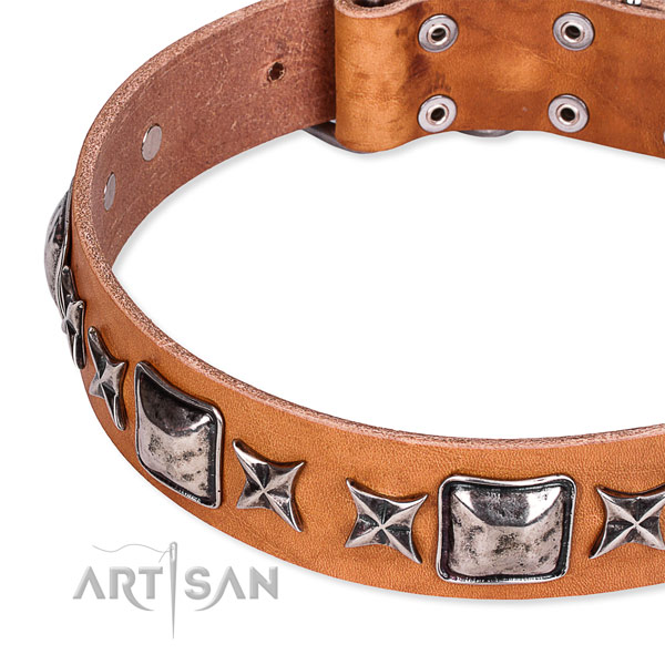 Everyday use embellished dog collar of top quality full grain leather