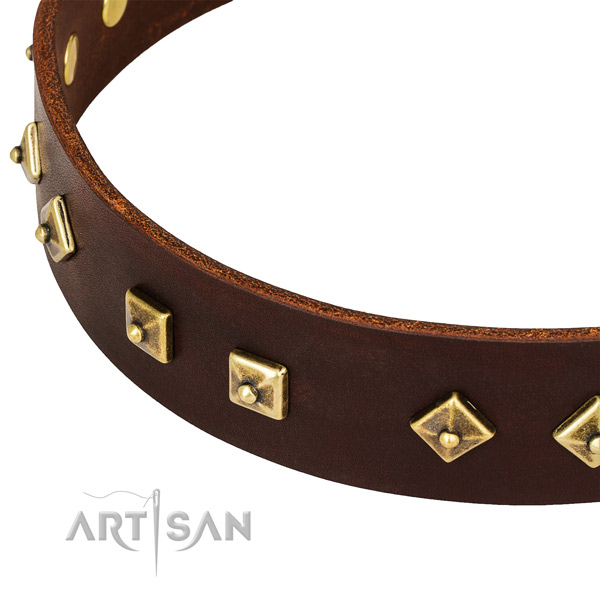 Awesome genuine leather collar for your beautiful four-legged friend