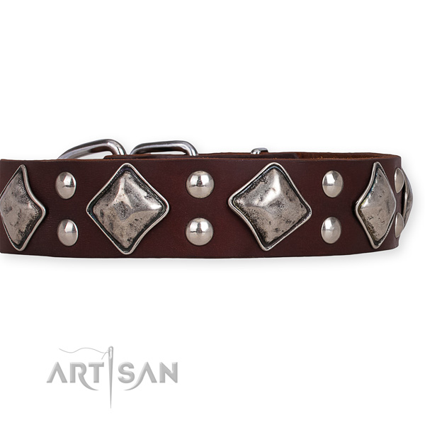 Full grain natural leather dog collar with incredible rust resistant studs