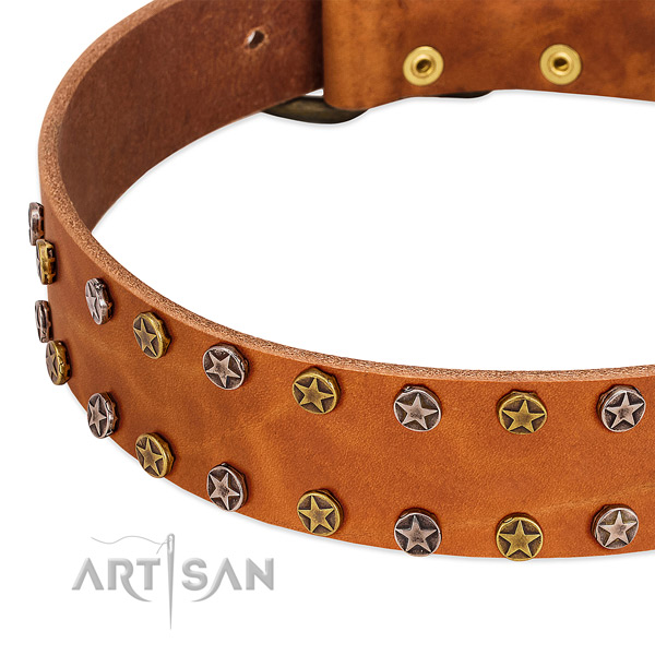 Everyday walking natural leather dog collar with awesome adornments