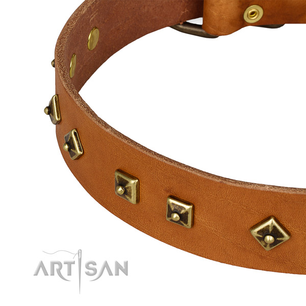 Studded genuine leather collar for your beautiful canine