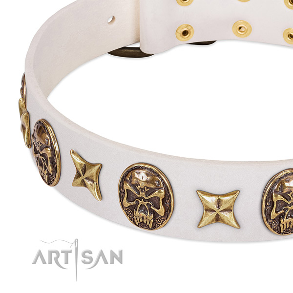 Best quality dog collar created for your impressive doggie