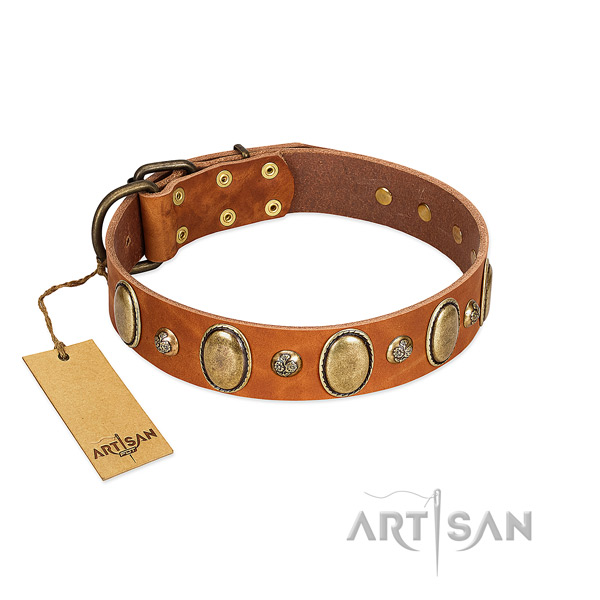 Natural leather dog collar of flexible material with fashionable adornments
