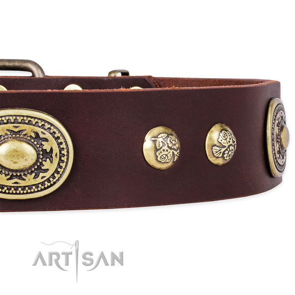 Incredible natural leather collar for your stylish four-legged friend