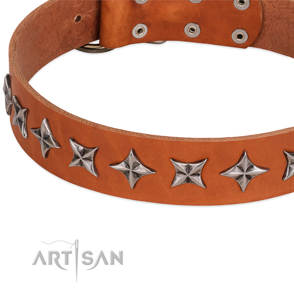 Everyday walking decorated dog collar of reliable natural leather