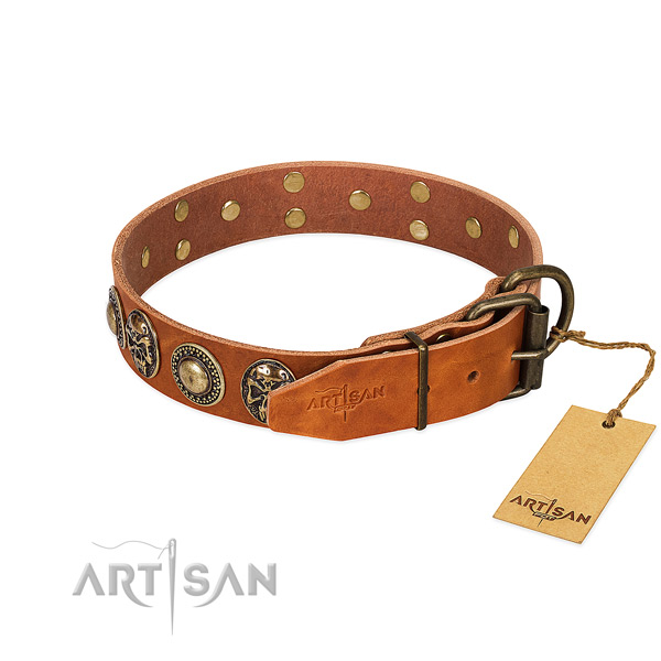 Reliable embellishments on everyday walking dog collar