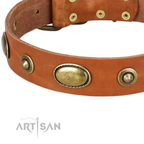 Durable studs on natural leather dog collar for your pet