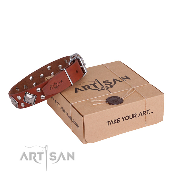 Fancy walking dog collar with Trendy rust resistant studs