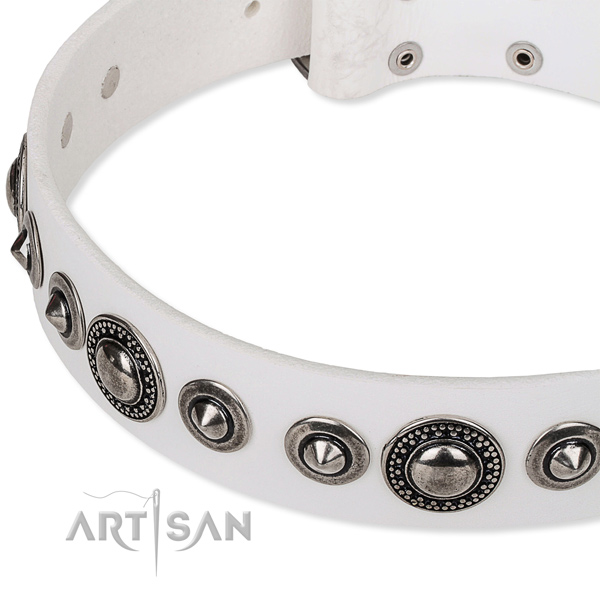 Daily use studded dog collar of durable full grain genuine leather