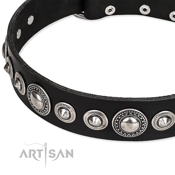 Comfy wearing embellished dog collar of quality full grain leather