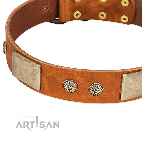 Rust-proof decorations on full grain leather dog collar for your canine