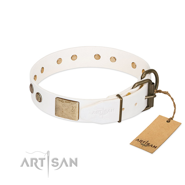 Rust resistant buckle on daily use dog collar