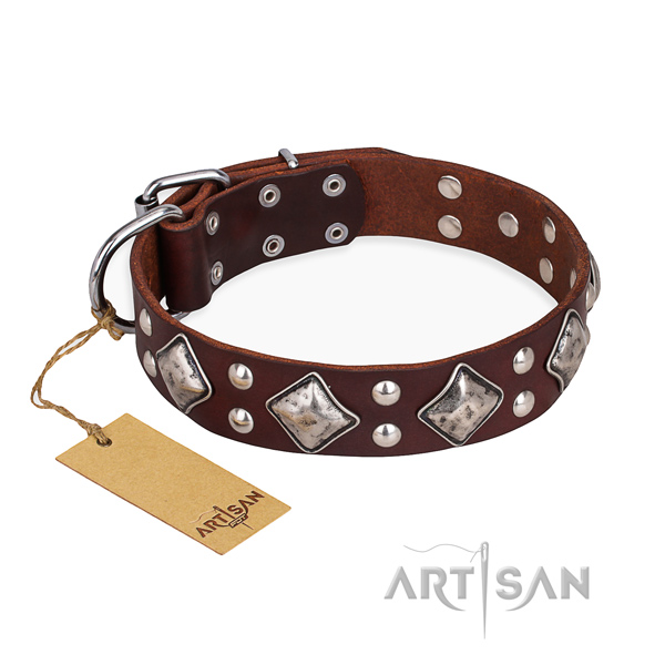 Stylish walking stunning dog collar with rust resistant hardware