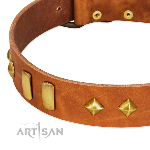 Fancy walking full grain genuine leather dog collar with unique embellishments