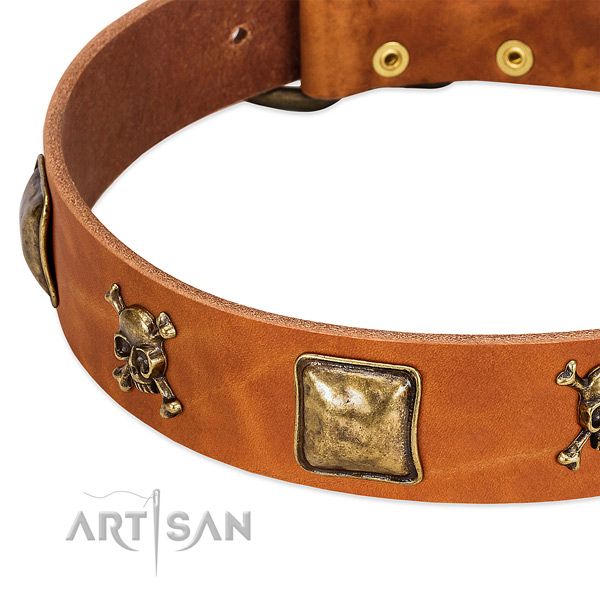 Stylish leather dog collar with strong embellishments