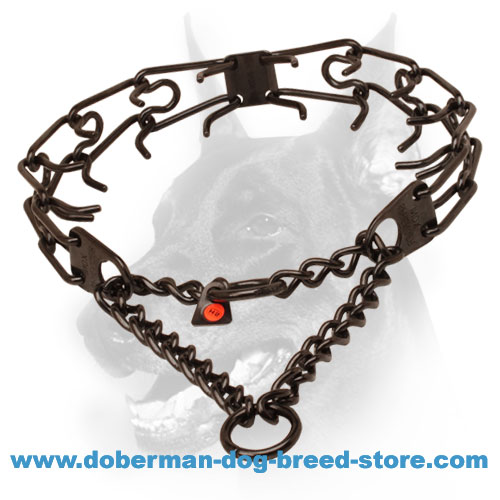 Prong collar of black stainless steel for poorly behaved dogs