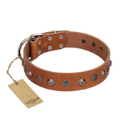 """Silver Age"" Fashionable FDT Artisan Tan Leather Doberman Collar with Silver-Like Studs"