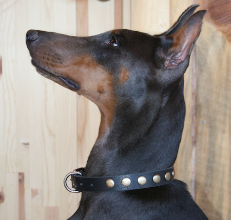 doberman leather dog collar