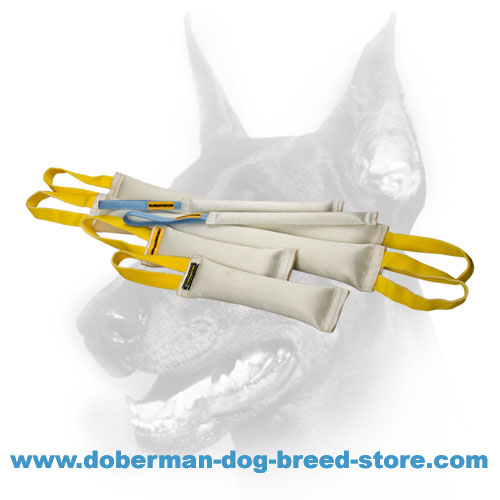 Doberman dog training set of real fire hose material
