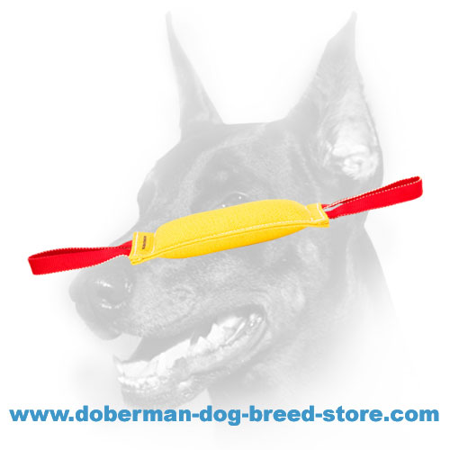 Doberman puppy training tug with two nylon handles