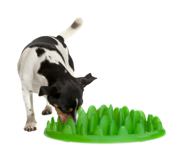 Doberman Interactive Feeder Turns Regular Nutrition into  a Game