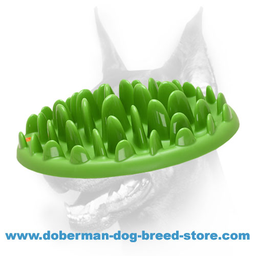 Interactive Dog Feeder for Doberman's Fun and Proper Nutrition