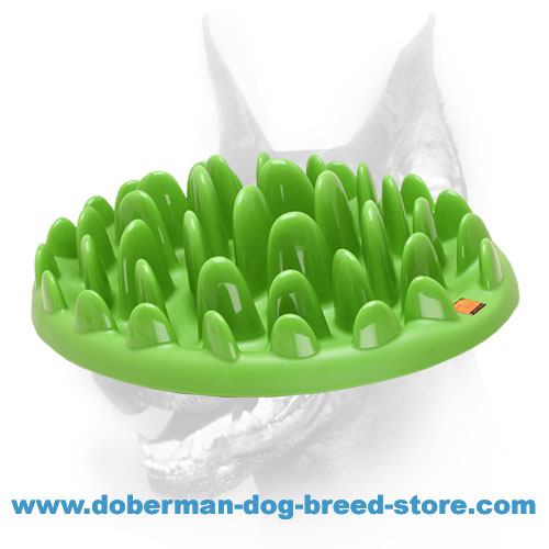 Canine Feeder Prevents the Doberman from Eating Fast