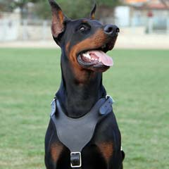 Easy handling well-made leather dog harness