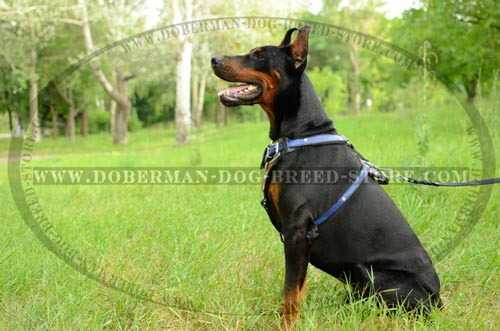 High Quality Doberman Leather Harness