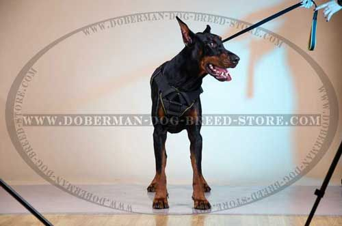 Specialized Nylon Canine Harness for Dobermans with Small Breat Plate